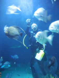 diver-at-natoinal-aquarium-baltimore-maryland-linda-barrett-all-the-buzz